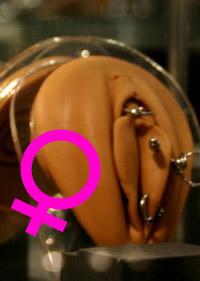 Modèle piercing génital féminin