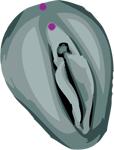 Piercing génital intime féminin Christina