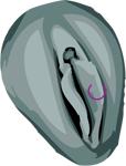 Piercing génital intime féminin petites lèvres