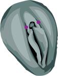 Piercing génital intime féminin triangle